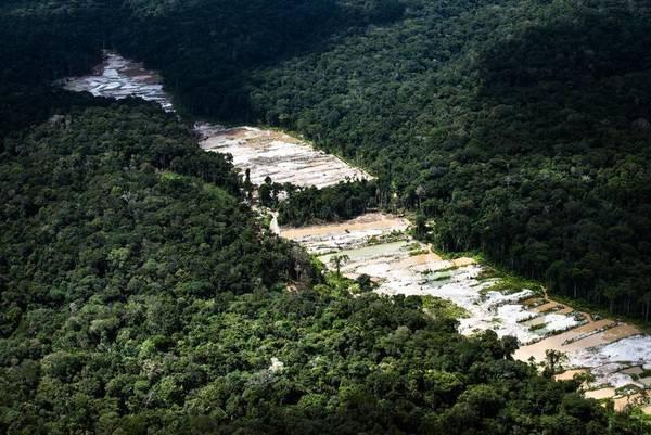 Tribunal-obriga-governo-da-Colômbia-a-proteger-Amazônia